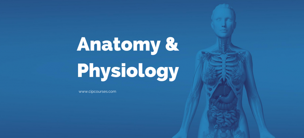 Anatomy & Physiology Online Curriculum